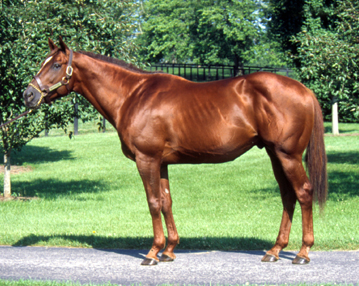 Sorrel or Chestnut? - Page 3 - The Horse Forum - photo#4
