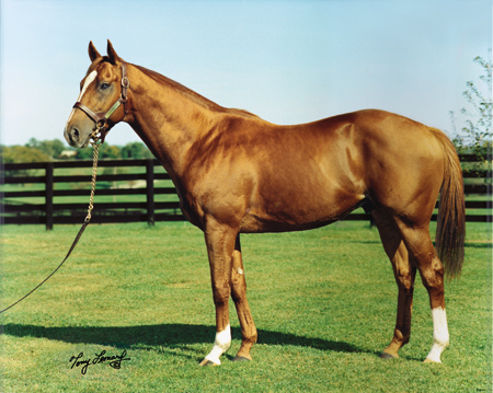 Equine Color Genetics - photo#29