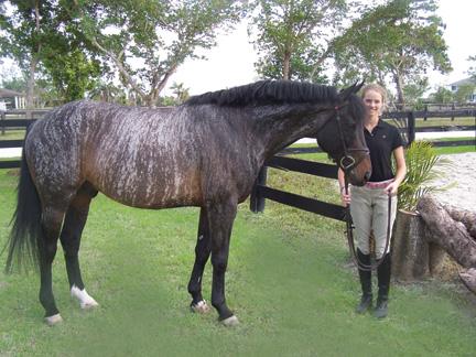 Recherche personne pour faire un portrait de ce cheval ! Natal_white_brindle