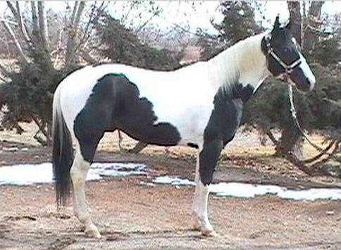 Equine Color Genetics